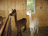 Modular Horse Barn - Low Profile Trailside Modular Horse Barn - 24 x 46