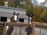 Monitor Barn - 6 Stall Monitor Barn Horses - 30 x 36